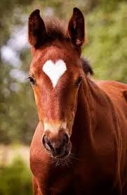 Horses touch our souls and hearts